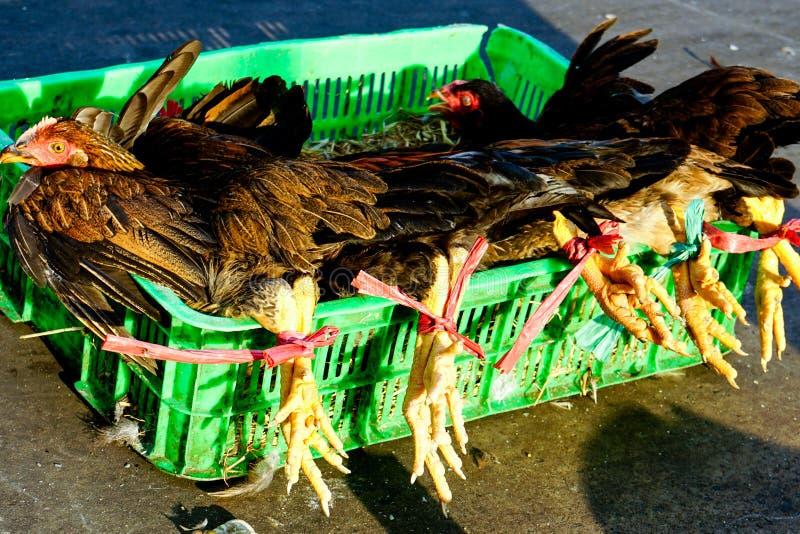 Ζωντανά κοτόπουλα για την πώληση στην αγορά Saigon στοκ εικόνα