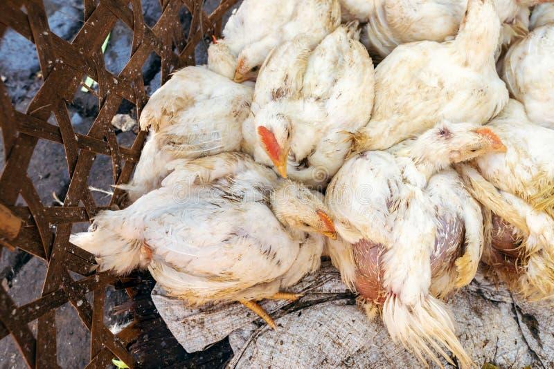 Ζωντανά κοτόπουλα σε μια αγορά τροφίμων Νησί του Μπαλί, Ινδονησία στοκ εικόνες με δικαίωμα ελεύθερης χρήσης