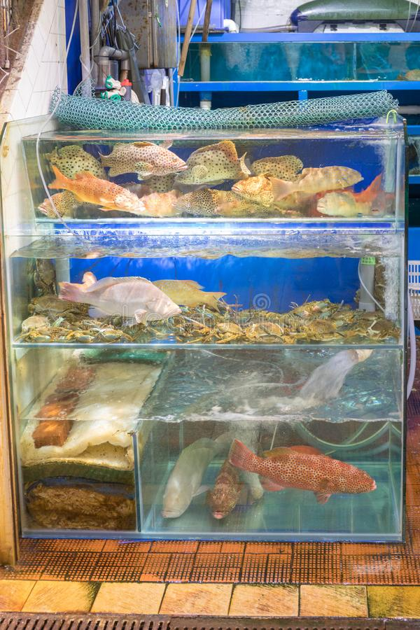 ζωντανά ψάρια στοκ φωτογραφίες με δικαίωμα ελεύθερης χρήσης