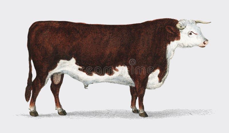 Ζωντανεψοντη φύση 1855, ένα πορτρέτο ενός ταύρου Ψηφιακά ενισχυμένος από το rawpixel διανυσματική απεικόνιση