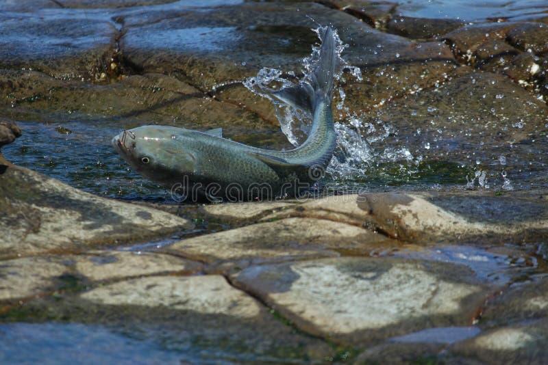 ζωντανοί βράχοι ψαριών στοκ εικόνες με δικαίωμα ελεύθερης χρήσης