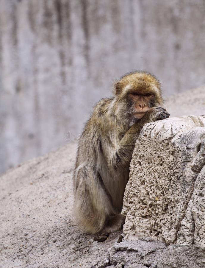 ζωολογικός κήπος ζώων στοκ εικόνα με δικαίωμα ελεύθερης χρήσης