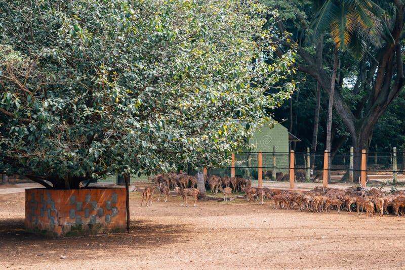 Ζωολογικός κήπος του Mysore, ζωολογικοί κήποι Sri Chamarajendra στο Mysore, Ινδία στοκ εικόνες