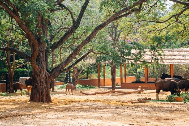 Ζωολογικός κήπος του Mysore, ζωολογικοί κήποι Sri Chamarajendra στο Mysore, Ινδία στοκ εικόνα
