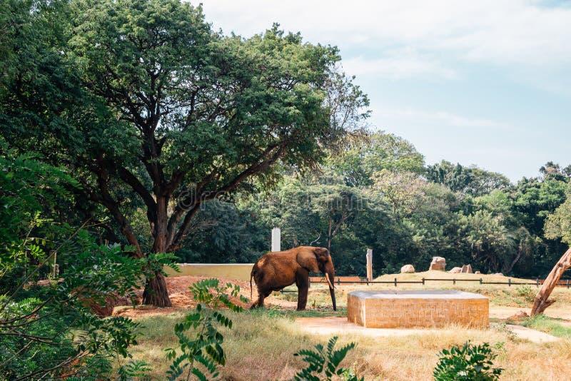Ζωολογικός κήπος του Mysore, ζωολογικοί κήποι Sri Chamarajendra στο Mysore, Ινδία στοκ φωτογραφία με δικαίωμα ελεύθερης χρήσης