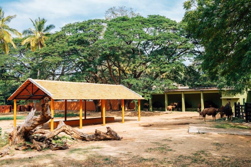 Ζωολογικός κήπος του Mysore, ζωολογικοί κήποι Sri Chamarajendra στο Mysore, Ινδία στοκ φωτογραφίες με δικαίωμα ελεύθερης χρήσης