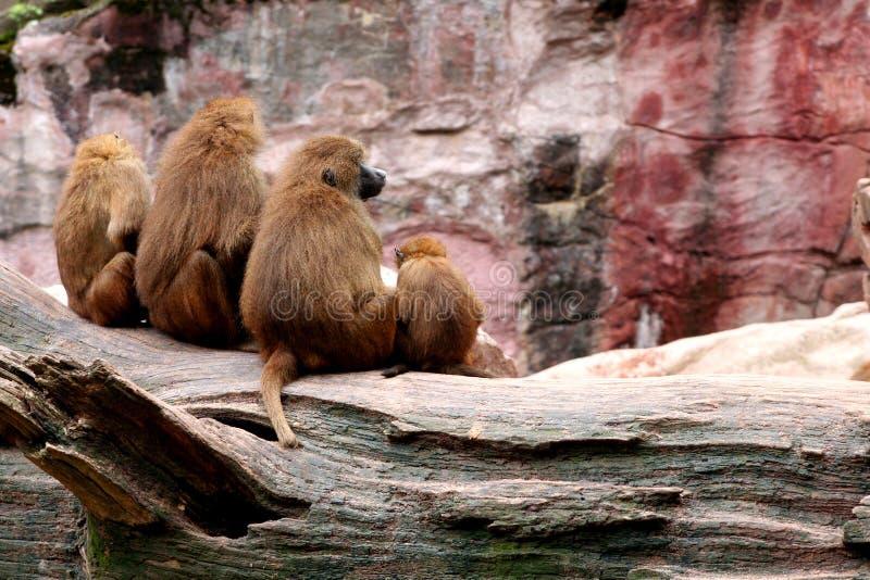 ζωολογικός κήπος στοκ φωτογραφία με δικαίωμα ελεύθερης χρήσης