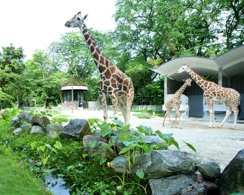 Ζωολογικός κήπος Negara Μαλαισία στοκ εικόνες με δικαίωμα ελεύθερης χρήσης