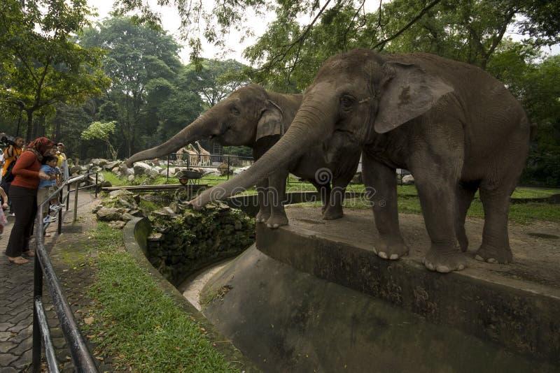 Ζωολογικός κήπος Negara Μαλαισία στοκ φωτογραφία