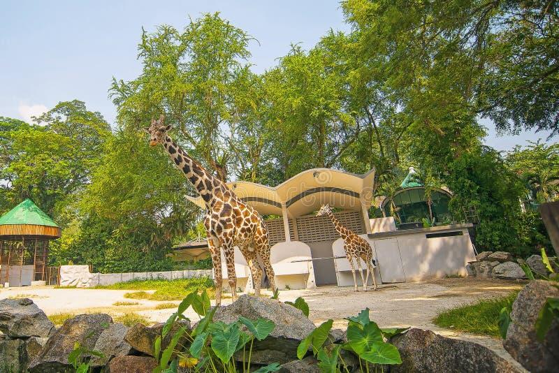 Ζωολογικός κήπος Negara Μαλαισία στοκ εικόνες