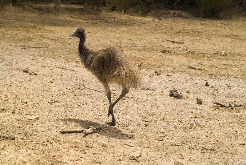 Ζωολογία της Αυστραλίας στοκ εικόνα