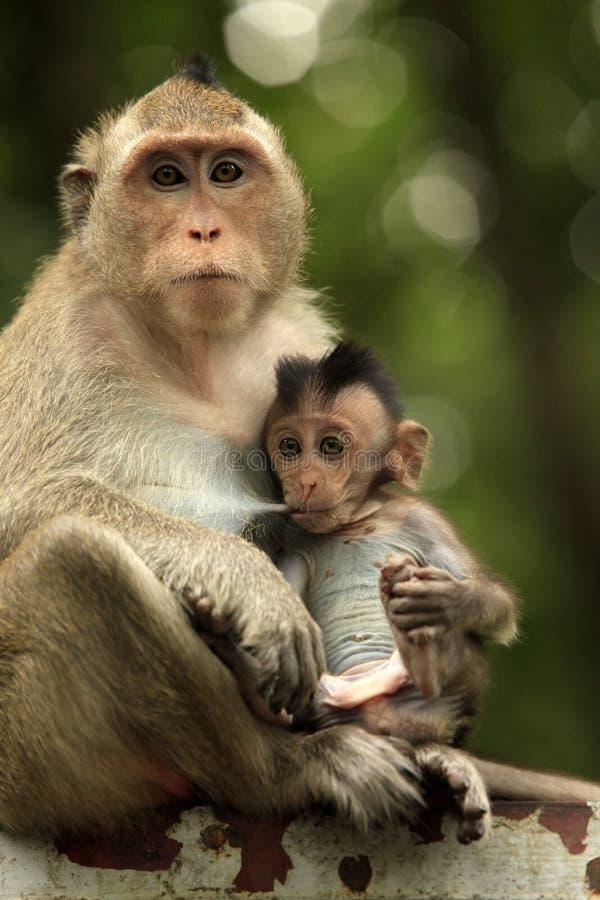 ζωολογικός κήπος πιθήκων της οικογενειακής Ινδονησίας του Μπαλί στοκ εικόνες