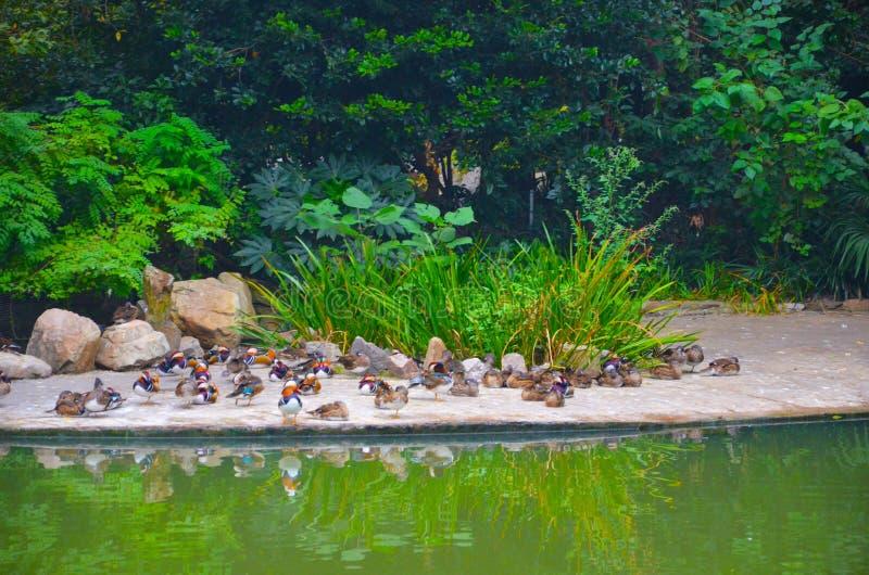 Ζωολογικός κήπος της Σαγκάη στοκ φωτογραφίες με δικαίωμα ελεύθερης χρήσης