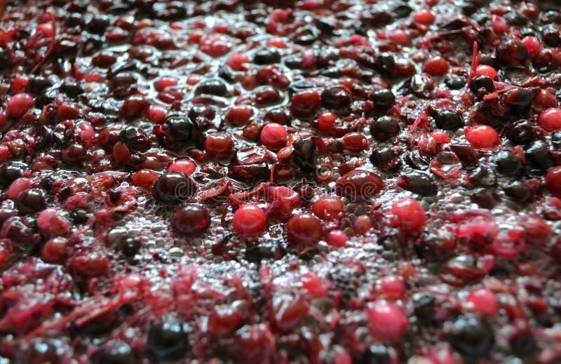 Ζύμωση του πολτού από τα μούρα για το κρασί στοκ εικόνες