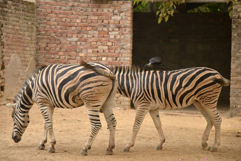 Ζώα ζωολογικών κήπων στοκ φωτογραφία