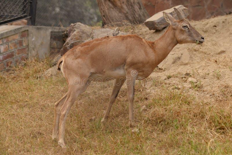 Ζώα ζωολογικών κήπων στοκ εικόνες