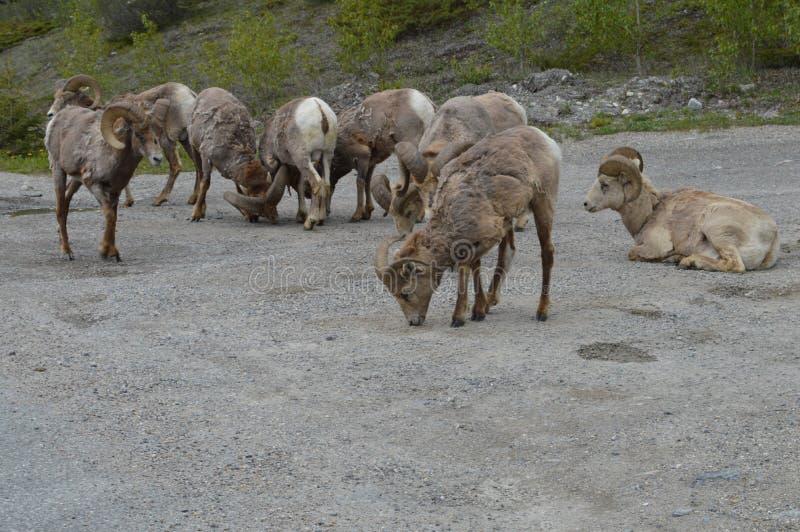 Ζώα ιασπίδων στοκ φωτογραφία