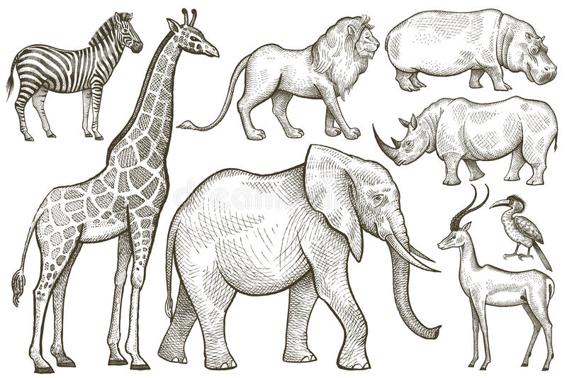 ζώα που τίθενται αφρικανικά ελεύθερη απεικόνιση δικαιώματος