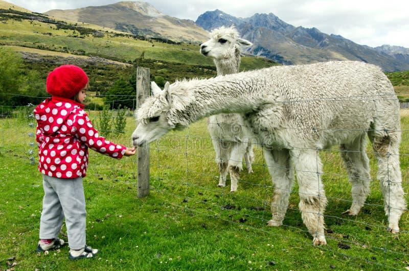 Ζώα τροφών μικρών κοριτσιών στοκ φωτογραφίες με δικαίωμα ελεύθερης χρήσης