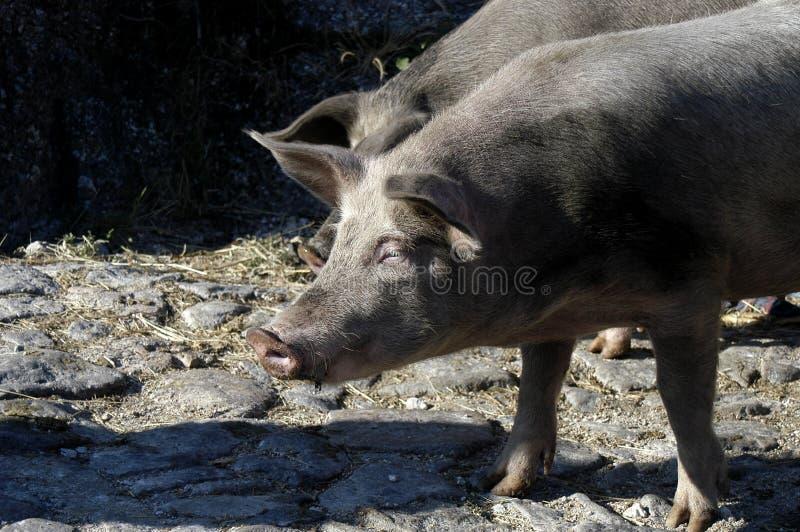 ζώα στοκ εικόνα με δικαίωμα ελεύθερης χρήσης