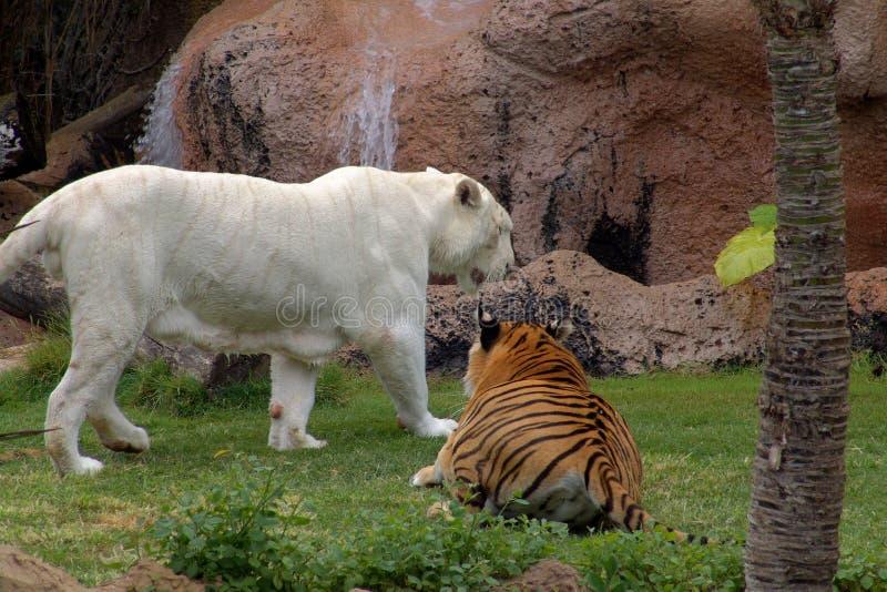 ζώα στοκ φωτογραφία