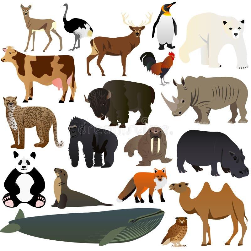 Ζώα 1 στοκ εικόνες με δικαίωμα ελεύθερης χρήσης