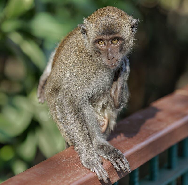 Ζώα greennature πίθηκων φύσης Mongkey στοκ εικόνες