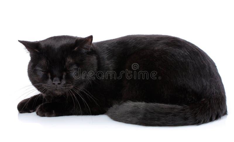 Ζώο, γάτα, έννοια κατοικίδιων ζώων - μαύρη βρετανική γάτα στοκ εικόνα