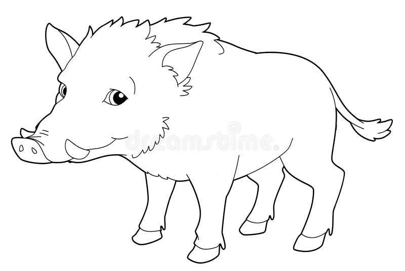 Ζώο κινούμενων σχεδίων - κάπρος - απομονωμένη - χρωματίζοντας σελίδα - απεικόνιση ελεύθερη απεικόνιση δικαιώματος