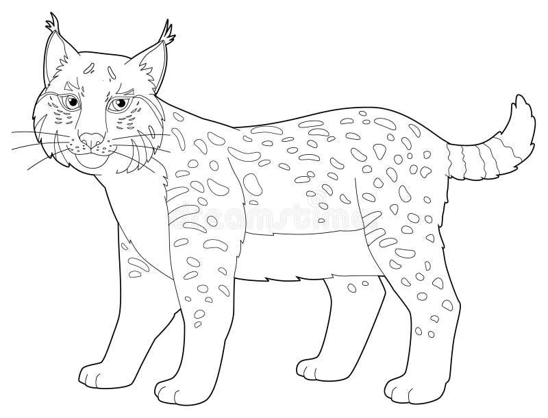Ζώο κινούμενων σχεδίων - λυγξ - που απομονώνονται - χρωματίζοντας σελίδα διανυσματική απεικόνιση