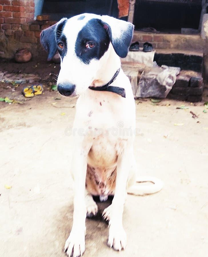 Ζώο σκυλιών της Pet στοκ φωτογραφίες με δικαίωμα ελεύθερης χρήσης