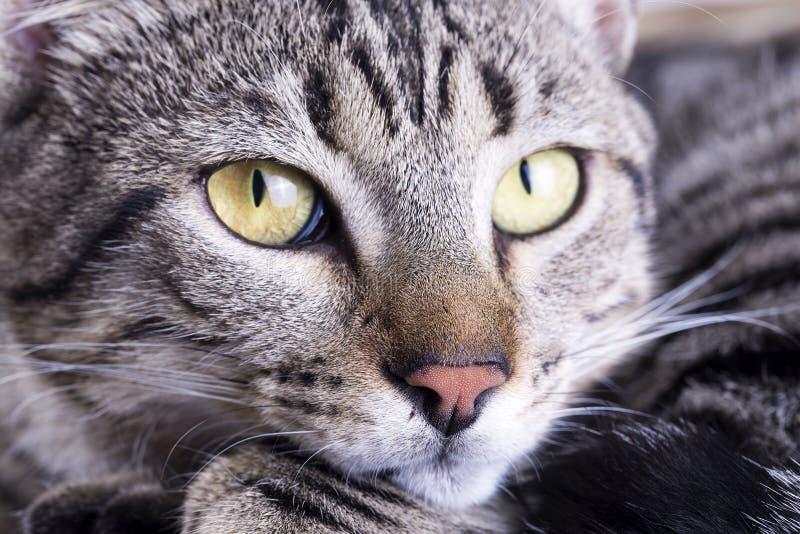 Ζώο της Pet  χαριτωμένη γάτα στοκ φωτογραφία με δικαίωμα ελεύθερης χρήσης