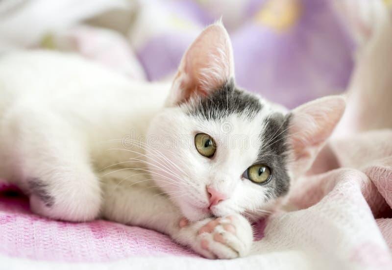 Ζώο της Pet  χαριτωμένη γάτα στοκ εικόνες με δικαίωμα ελεύθερης χρήσης