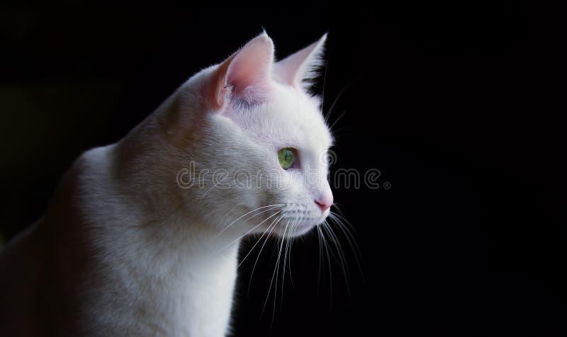 Ζώο της Pet  χαριτωμένη γάτα στοκ εικόνα με δικαίωμα ελεύθερης χρήσης