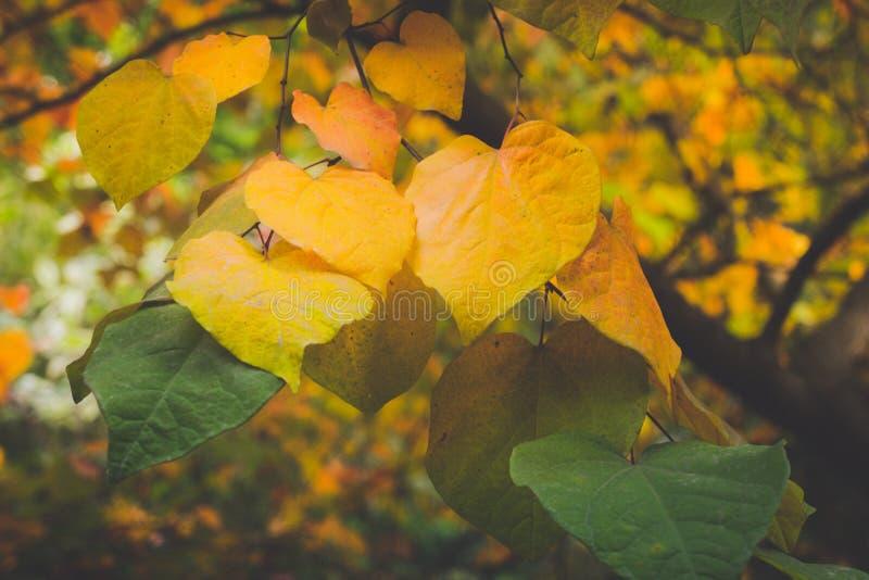 Ηλέκτρινα φύλλα πτώσης με το ρηχό βάθος του τομέα στοκ φωτογραφία