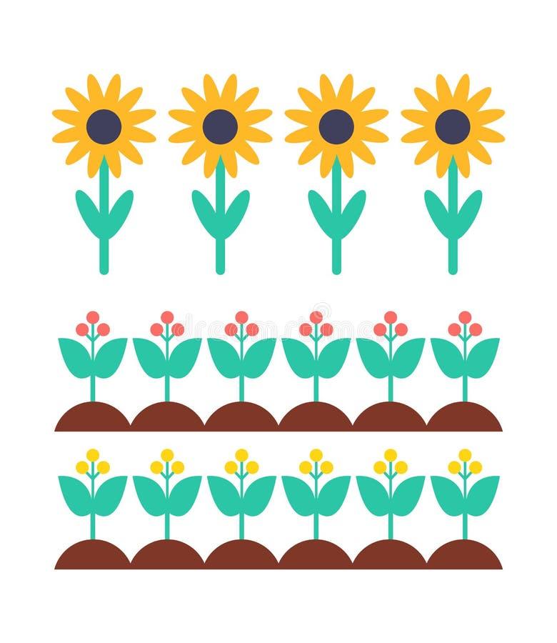 Ηλίανθος και μούρο Μπους στο διανυσματικό σύνολο κρεβατιών κήπων διανυσματική απεικόνιση
