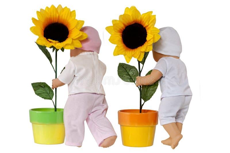 Download ηλίανθος κουκλών στοκ εικόνα. εικόνα από φυτό, rear, χρώμα - 22789035