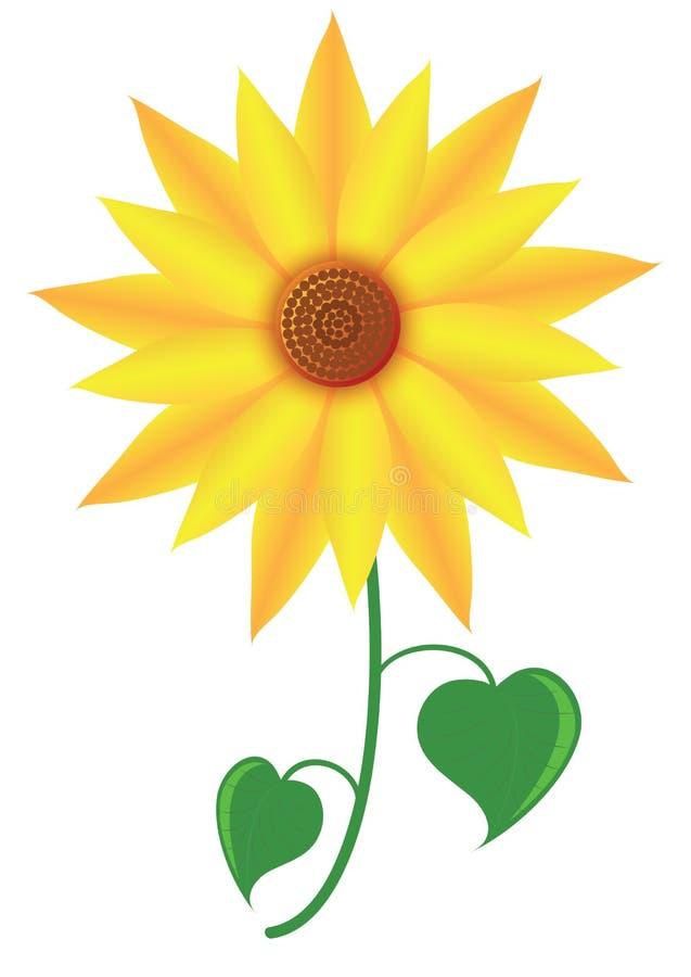 Ηλίανθος λουλουδιών ελεύθερη απεικόνιση δικαιώματος