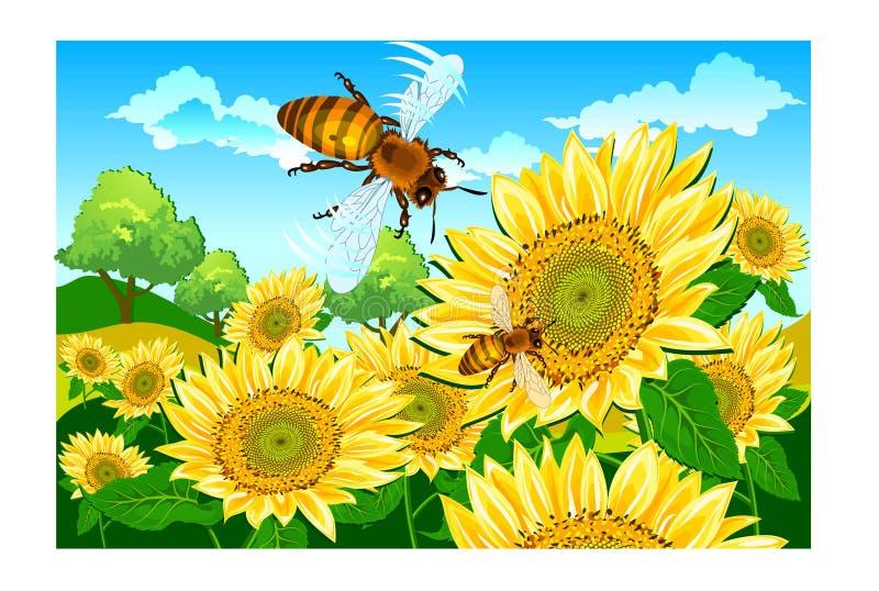 ηλίανθος μελισσών διανυσματική απεικόνιση