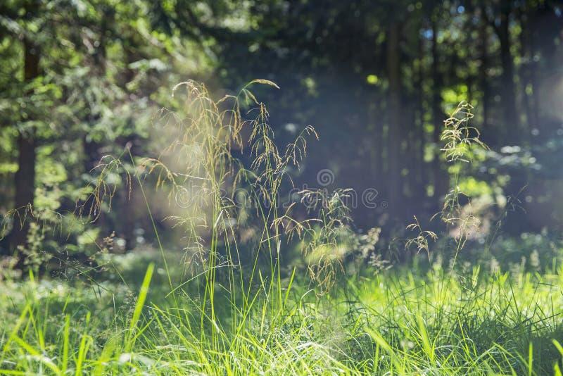Ηλίανθος στο οργανικό αγρόκτημα στοκ εικόνες