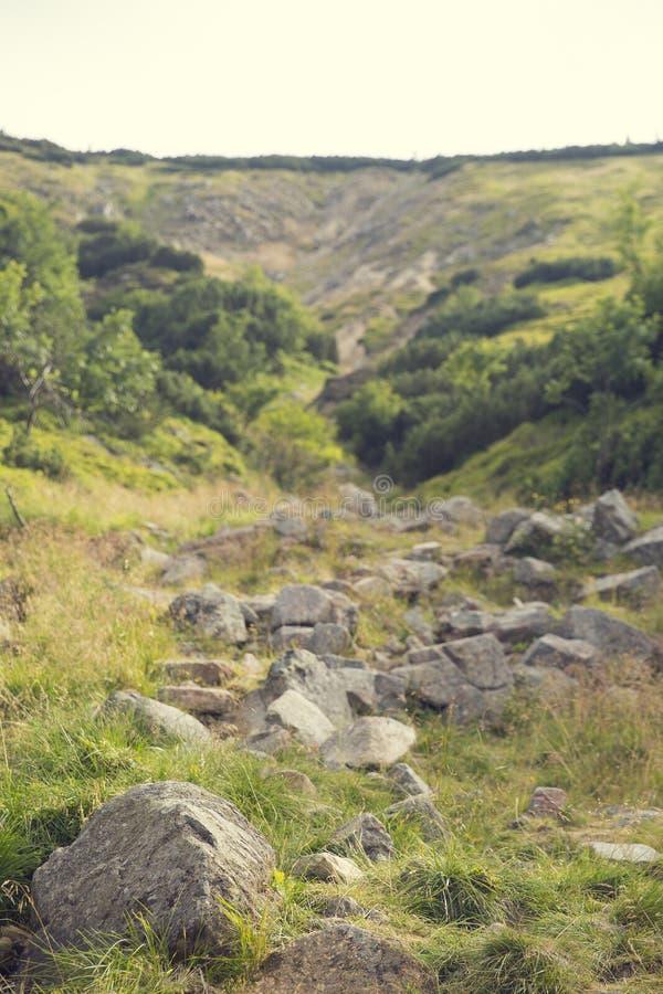 Ηλίανθος στο οργανικό αγρόκτημα στοκ φωτογραφία με δικαίωμα ελεύθερης χρήσης