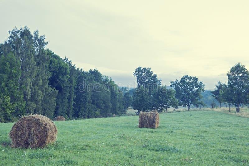 Ηλίανθος στο οργανικό αγρόκτημα στοκ φωτογραφία
