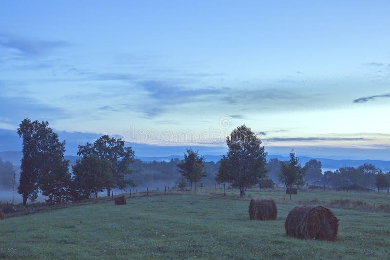 Ηλίανθος στο οργανικό αγρόκτημα στοκ εικόνα
