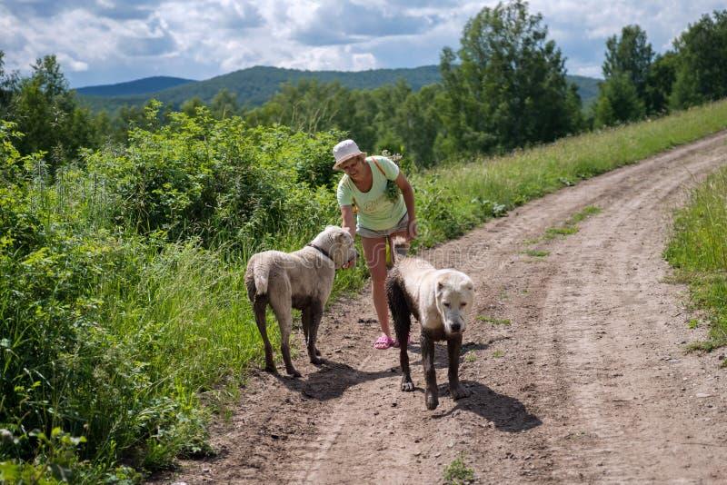 Ηλικιωμένη γυναίκα που περπατά με τα ρυπαρά σκυλιά στα ξύλα στοκ φωτογραφίες με δικαίωμα ελεύθερης χρήσης