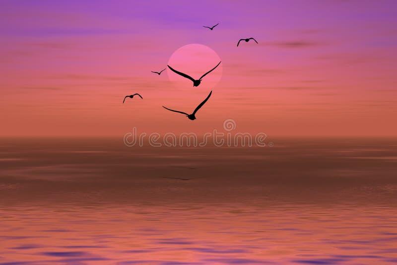 ηλιοβασίλεμα άλμπατρος στοκ φωτογραφία με δικαίωμα ελεύθερης χρήσης