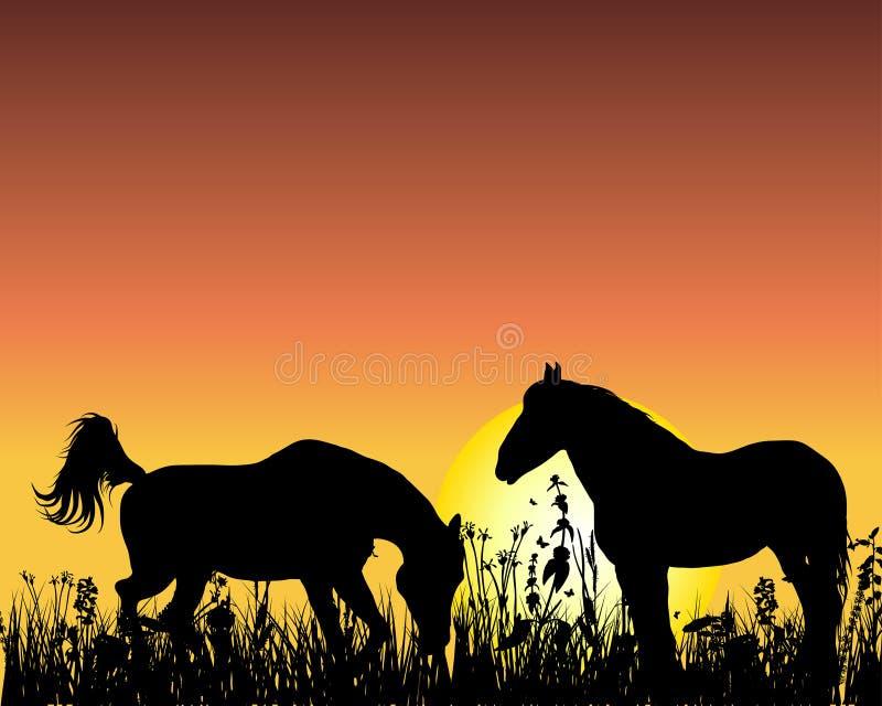 ηλιοβασίλεμα αλόγων αν&alpha διανυσματική απεικόνιση