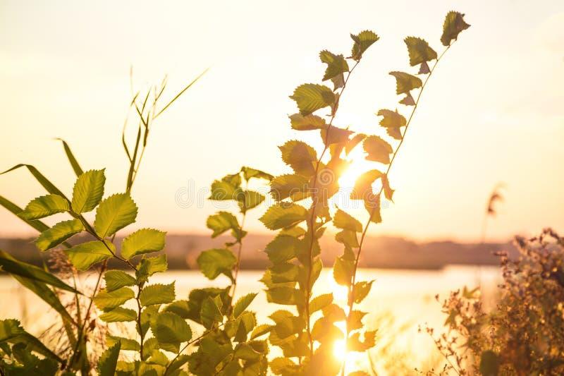 Ηλιοβασίλεμα από τον ποταμό στοκ φωτογραφίες με δικαίωμα ελεύθερης χρήσης