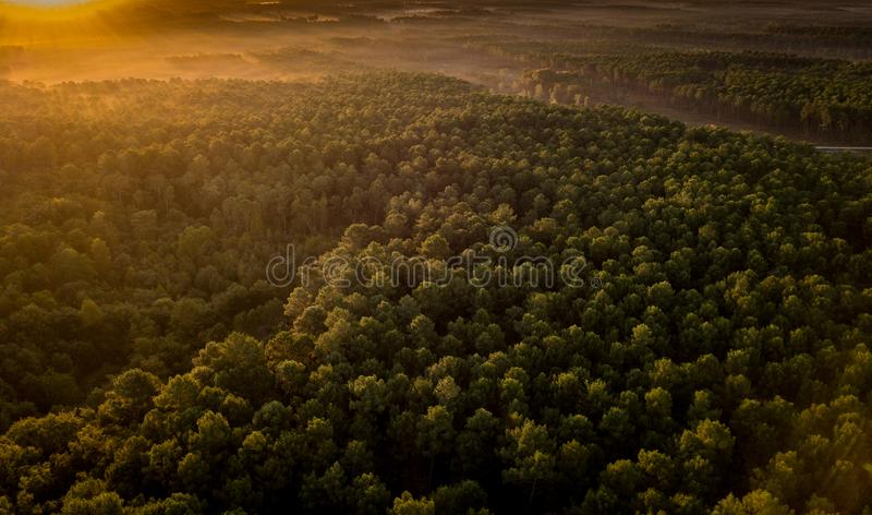 Ηλιοβασίλεμα, δάσος από τον αμμόλοφο du Pilat, λεκάνη του Αρκασόν στοκ εικόνα με δικαίωμα ελεύθερης χρήσης