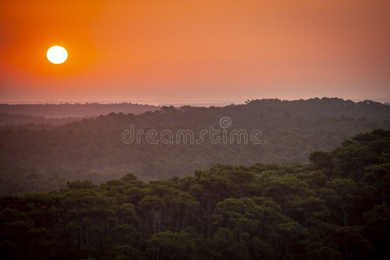 Ηλιοβασίλεμα, δάσος από τον αμμόλοφο du Pilat, ο μεγαλύτερος αμμόλοφος άμμου στην Ευρώπη, Γαλλία στοκ φωτογραφία με δικαίωμα ελεύθερης χρήσης