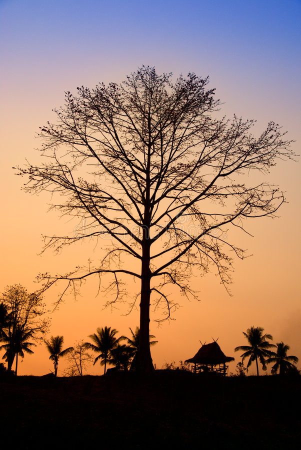 ηλιοβασίλεμα ζουγκλών στοκ εικόνες